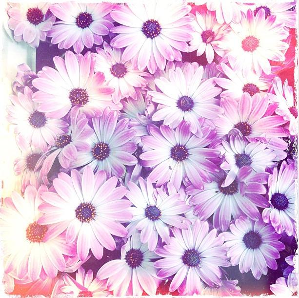 Amsterdam flowers via Stilzitat blog