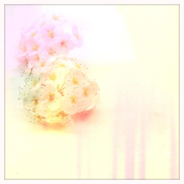 Les Jardin de A. via Passion & Obsession Blog