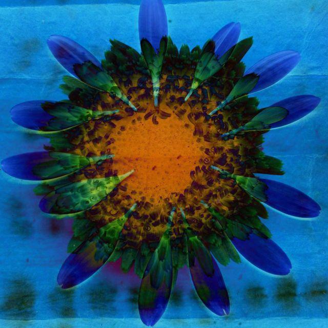 Flowers Le Jardin de A. via Passion and Obsession blog