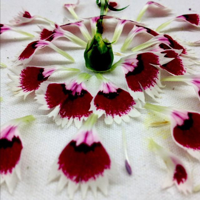 Carnations Flowers Le Jardin de A. 7 via Passion and Obsession blog