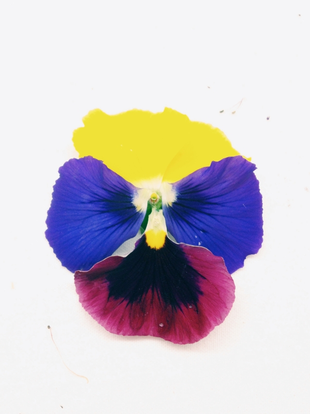 Pansy Flower Le Jardin de A. 4 via Passion and Obsession blog