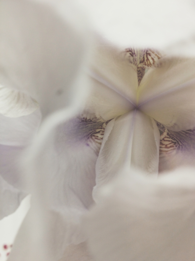 Iris Flowers via Passion and Obsession blog