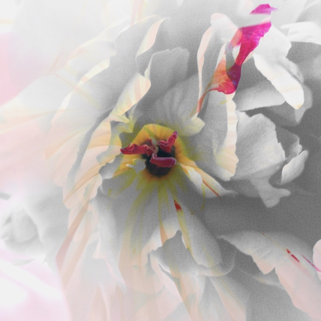 Le Jardin de A. V via Passion and Obsession blog
