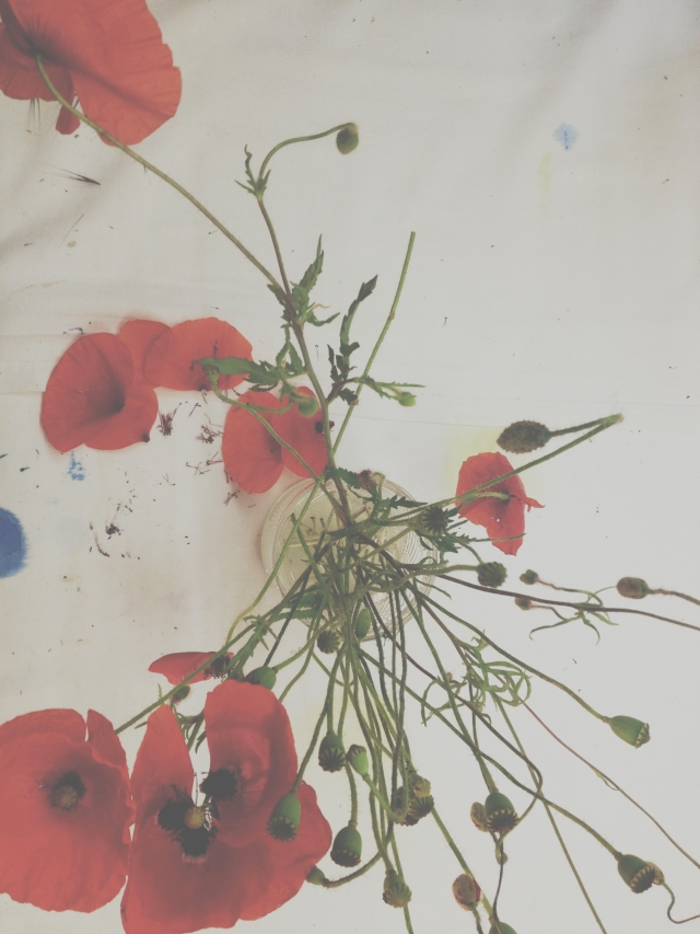 Red Poppies via Passion and Obsession blog