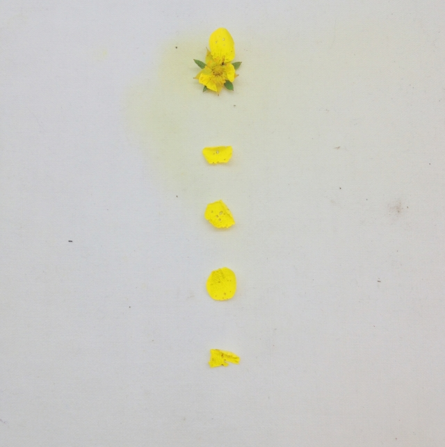 Yellow flowers via Passion and Obsession blog