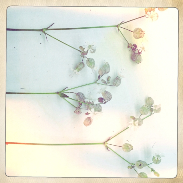 White flowers via Passion and Obsession blog