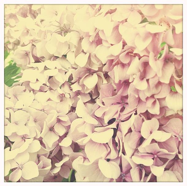 Hortensie via Stilzitat blog