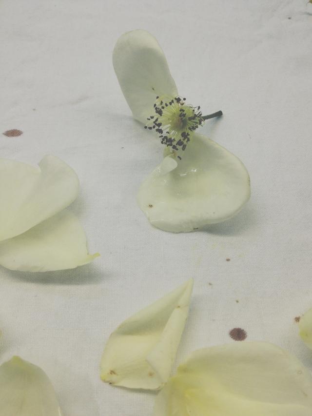 White roses via Stilzitat blog
