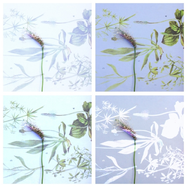 Collage of botanical prints  nd the real flowers of the Alps via Stilzitat blog