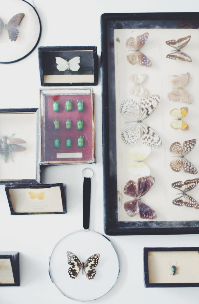 Antique butterflies and bugs via Stilzitat blog