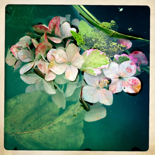 Hydrangea Fall flower arrangement via Stilzitat blog