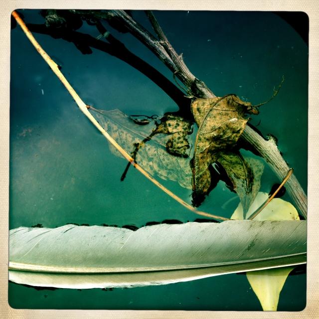 Fall flower arrangement with a feather via Stilzitat blog