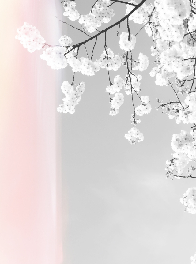 Cherry blossoms via Stilzitat blog