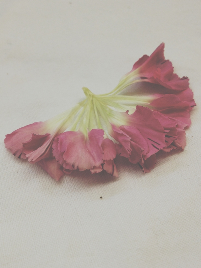 Pale pink carnations via Stilzitat blog