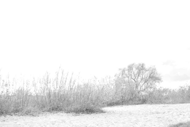 Black and white blurry shore via Stilzitat blog
