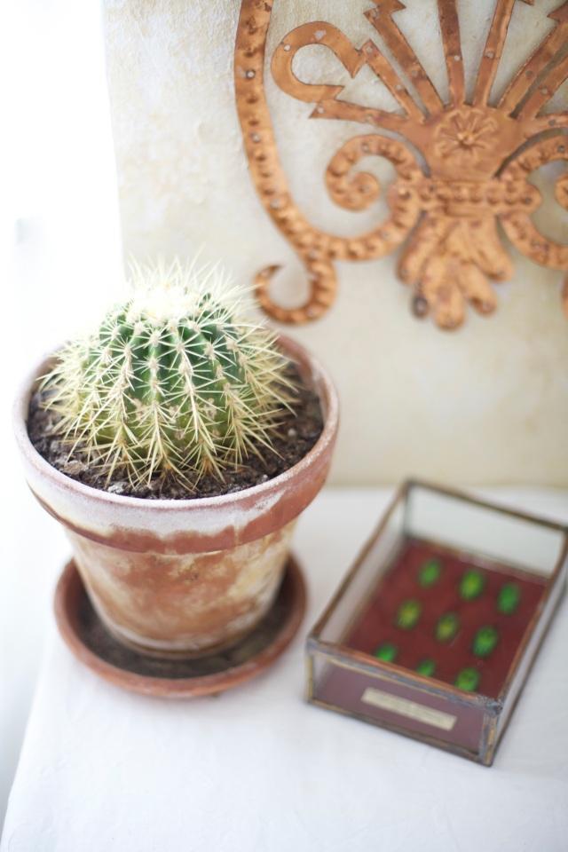 Cacti detail from Stilzitat studio via Stilzitat blog