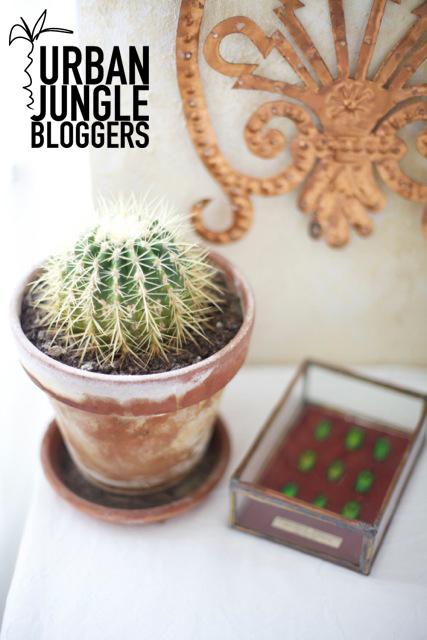 Urban Jungle Bloggers Home Office Stilzitat